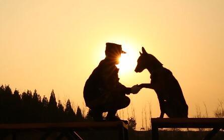 戊戌年话忠犬 搜救英雄炼成记