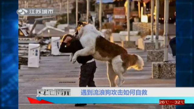 遇到流浪狗攻击如何自救