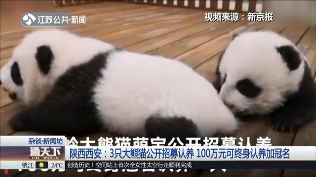 陕西西安:3只大熊猫公开招募认养 100万元可终身认养加冠名