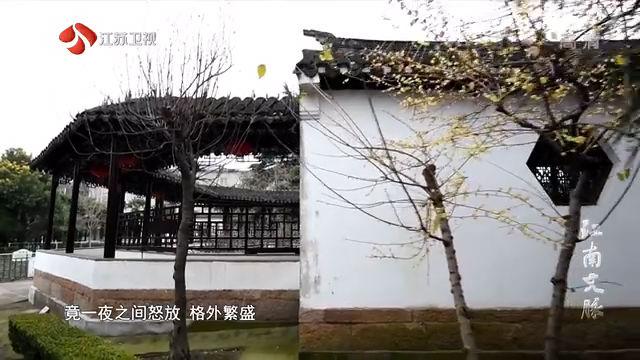 江南文脉 盐城·枯枝牡丹园