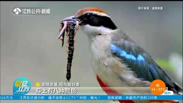 这些宝藏小鸟,和江苏关系不一般