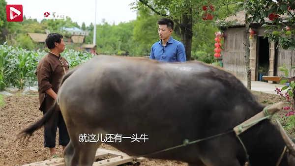 游遍江苏丨张家港永联村绘就农村现代画