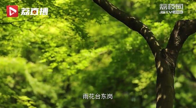 游遍江苏丨南京雨花台有一树永不凋谢的丁香花