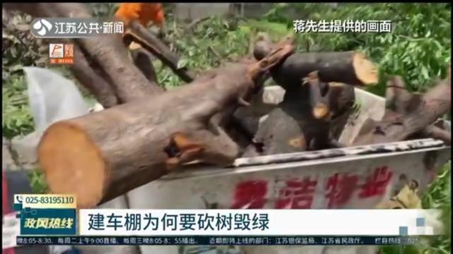 建车棚为何要砍树毁绿 砍树未经审批 城管将按程序进行处罚