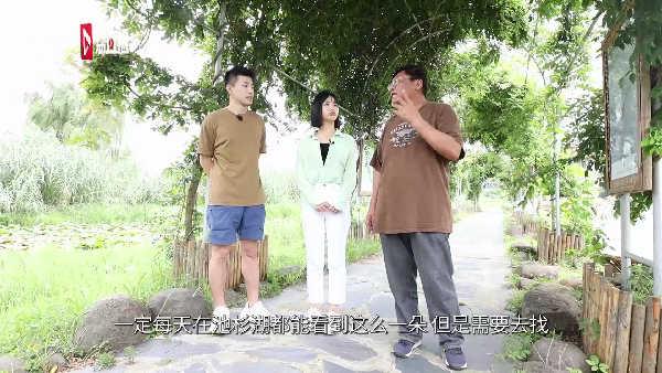 游遍江苏丨南京荷塘长出万里挑一的双色睡莲 号称世界睡莲冠军